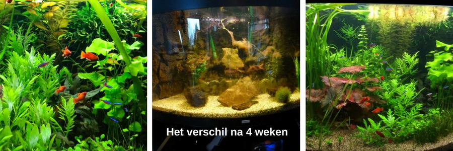 goedkope aquarium