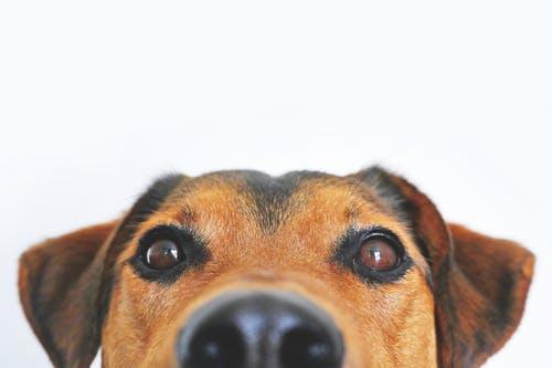 Verzekering voor honden