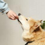 Waarom zou je de hond vers vlees voeren?